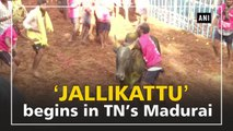 'Jallikattu' begins in TN's Madurai