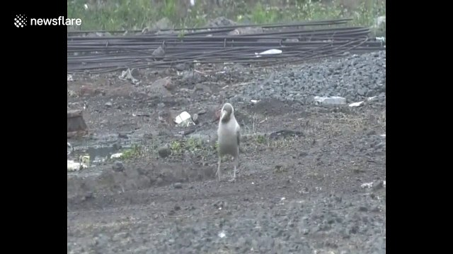 Rare white crow spotted in northern India