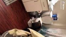 Assoiffé, ce chat boit l'eau des toilettes !
