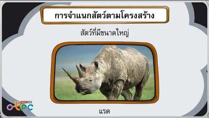 สื่อการเรียนการสอน การจำแนกสัตว์ตามโครงสร้างป.1วิทยาศาสตร์