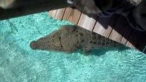 Ce crocodile énorme saute hors de l'eau et surprend les touristes