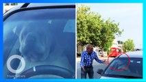 毛孩被留在車上 竟狂按喇叭叫主人回來