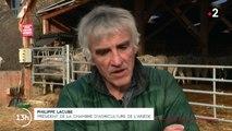 Pyrénées : faut-il réintroduire davantage d'ours ?
