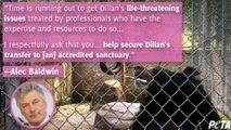 Alec Baldwin s'allie avec PETA pour faire libérer un ours maltraité