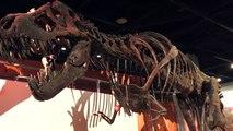 Volcanoes Didn't Kill Dinosaurs, Study Says