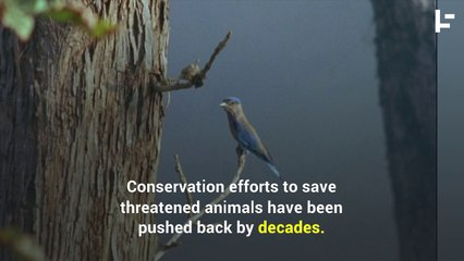 The Animals Getting Harmed By Australia Bushfires