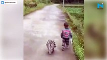 Watch: Porcupine follows kid in viral video