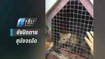 ช่วยสุนัขกว่า 10 ตัว ถูกขังปิดตายใต้ถุนศาลากลางเชียงใหม่ | เข้มข่าวค่ำ