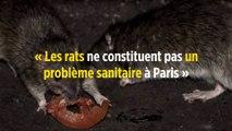 « Les rats ne constituent pas un problème sanitaire à Paris »