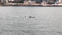 False killer whales spotted swimming through Hong Kong's Victoria Harbour