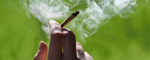 Marijuana may accelerate the growth of cancer