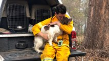Koala-sniffing dog saves animal lives amid Australia's bush fires