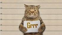 Cette information sur votre chat va vous faire froid dans le dos