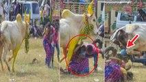 Sivagangai Jallikattu festival | Siravayal Manjuvirattu 2020