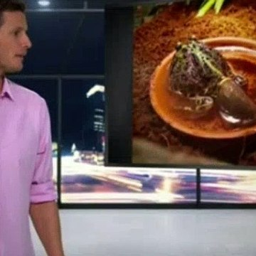 Tosh 0 Season 5 Episode 22
