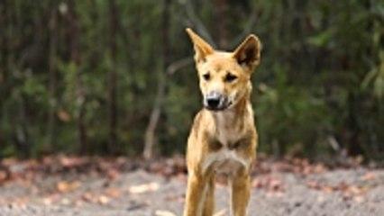 L'abattage de chiens interdit en Corée du Sud