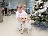 La jeune chienne Nickie accompagne au quotidien les résidents de la maison de retraite de Hochfelden