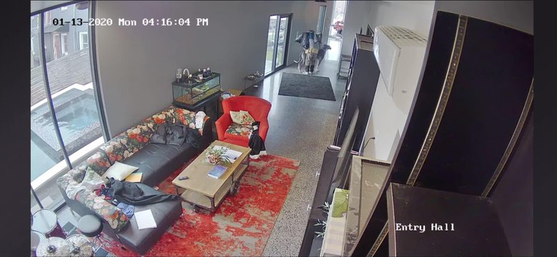 Great Dane Scares Intruder Entering House Sneakily