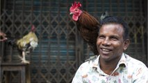 Indian Man Dies After Being Attacked By Rooster On Way To Cockfight