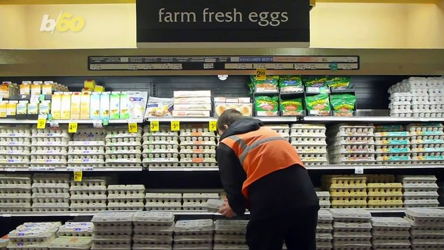 The Skinny on Hens That Lay Eggs You Buy at the Grocery Store