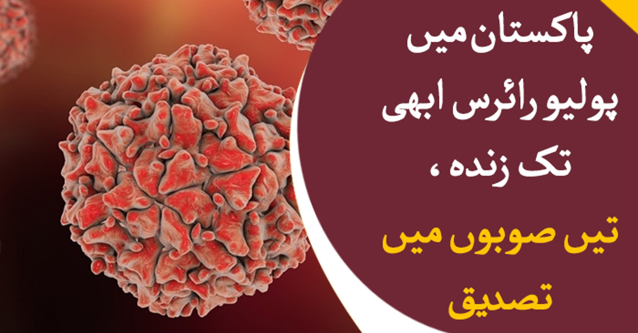 Polio virus found in 3 provinces of Pakistan