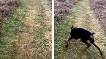 Un chien dégage un serpent dun chemin