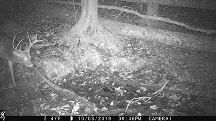 Trail Cameras Can Really Spook Deer