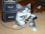 ROCK N ROLL CATS