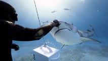 Il s'amuse à nourrir des requins à la main