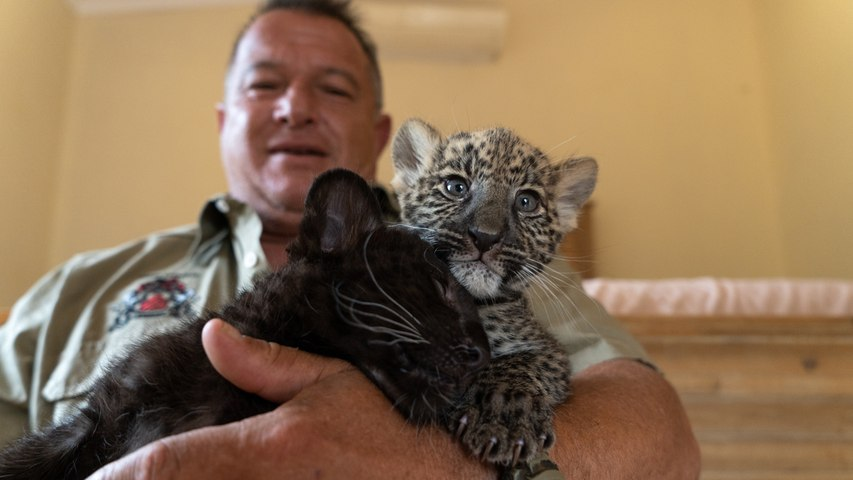 The Man Who Lives With Leopards   BEAST BUDDIES
