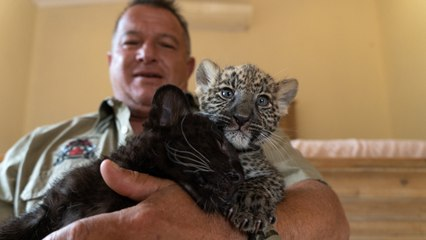 The Man Who Lives With Leopards | BEAST BUDDIES