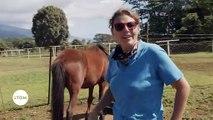 Polynésie Française : La pension de chevaux