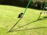 Le Rottweiler est-il un chien méchant 2 ?