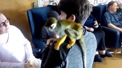 Larkrise spider monkey visit