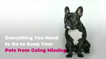 Everything You Need to Do to Keep Your Pets from Going Missing