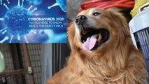 A Dog saves a Taiwan woman from Corona virus   Corona Virus   Dog   Oneinida kannada