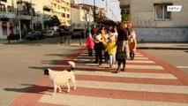 いい話!横断歩道を渡る子どもたちを見守る野良犬