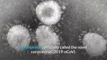 What is corona virus 2020   what is coronavirus 2020  china corona virus   corona virus facts vs fiction   Tips about coronavirus   3 Coronavirus  symptoms you need to know / wuhan coronavirus 2020