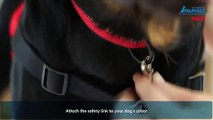 Halti Front Control Dog Harness, No Pull Harness for Small Dogs, | PuppySimply