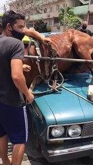 Lada choca contra un caballo en La Habana