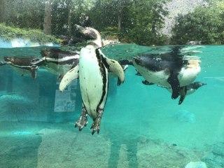 Le zoo de Beauval se prépare à la réouverture
