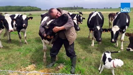 Le SOS d'un éleveur de l'Indre : il se bat pour sauver ses vaches