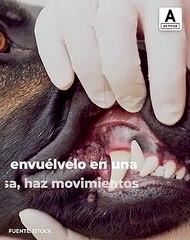 ¡Te decimos como lavarle los dientes fácilmente a tu perro!