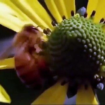 Amazing army ants