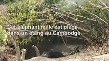Un éléphant sauvage sauvé d'un étang boueux au Cambodge
