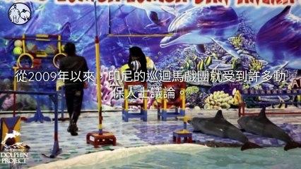 CollectionVideo-petmao_curation-petsmao.nownews-copy3-PetsMaoParser-2020/02/11-09:30