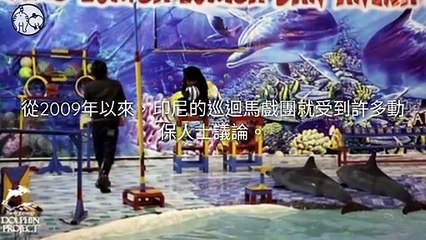 CollectionVideo-petmao_curation-petsmao.nownews-copy4-PetsMaoParser-2020/02/11-09:30