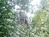mikos del tena Ecuador