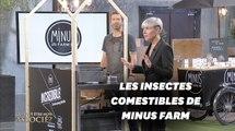 """Minus Farm, la ferme urbaine d'insectes comestibles dans """"Qui veut être mon associé"""""""