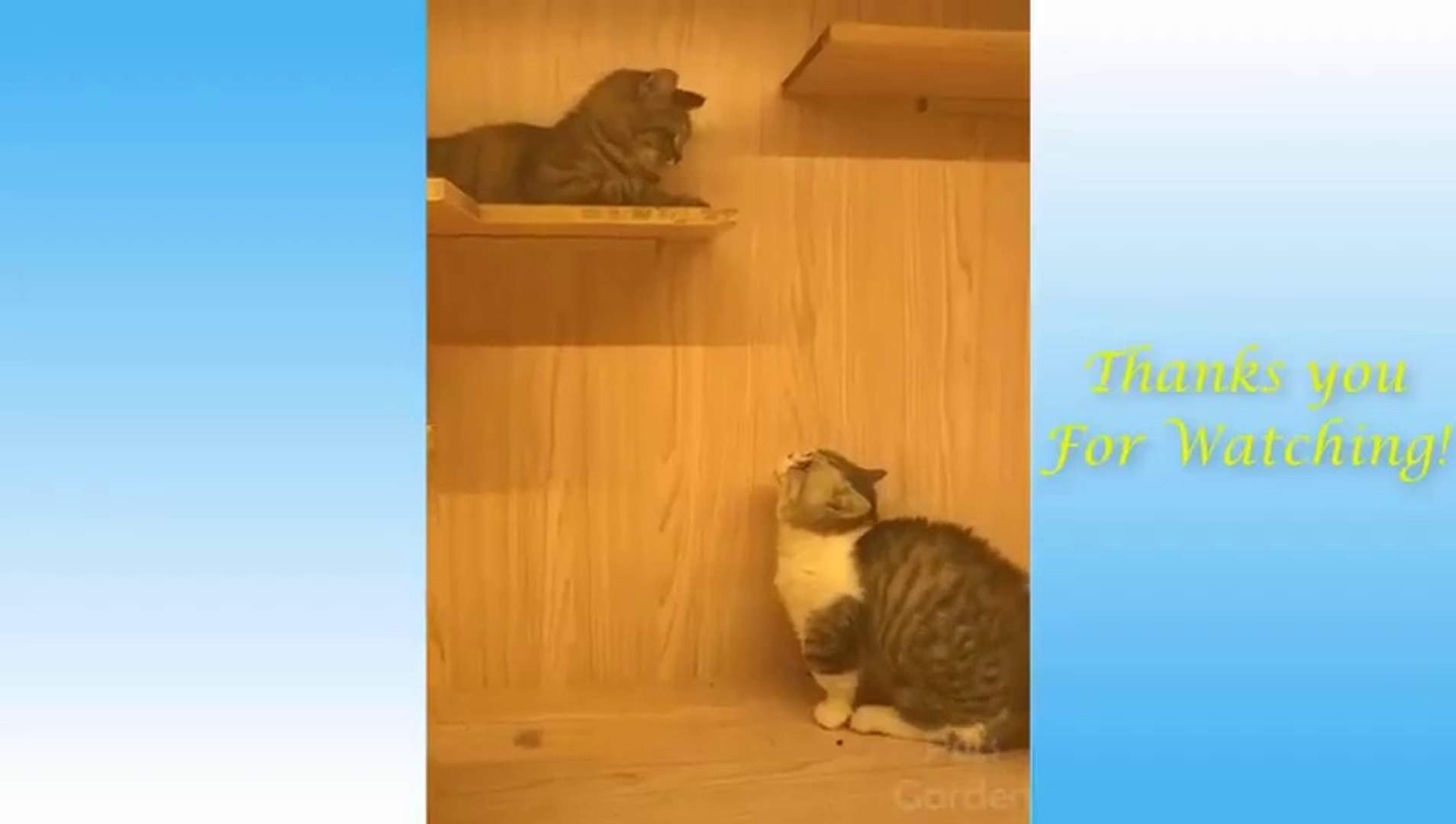 Cute Pets And Funny Animals Compilation #4 - Pets Garden_2